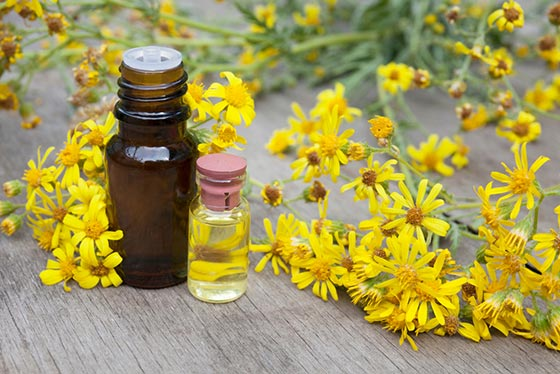 Essential oils are chemicals extracted from plants