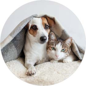 Making your pet feel warm